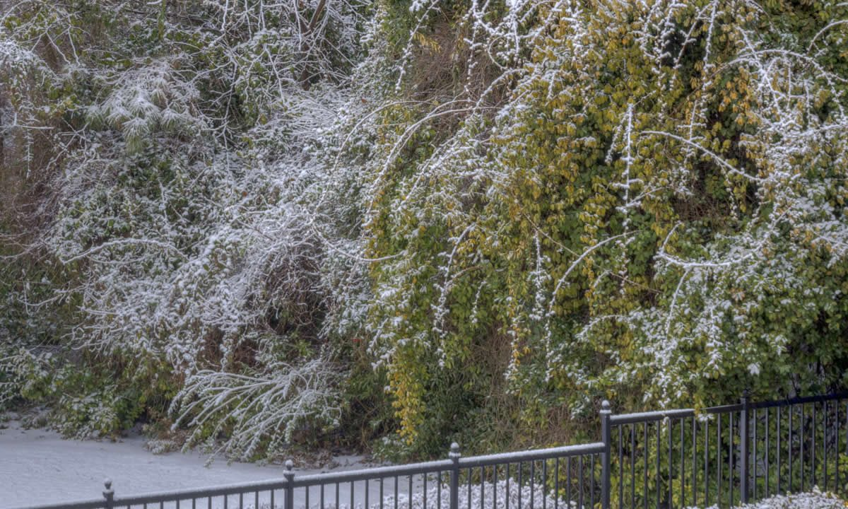 First Snow on the trees in Atlanta