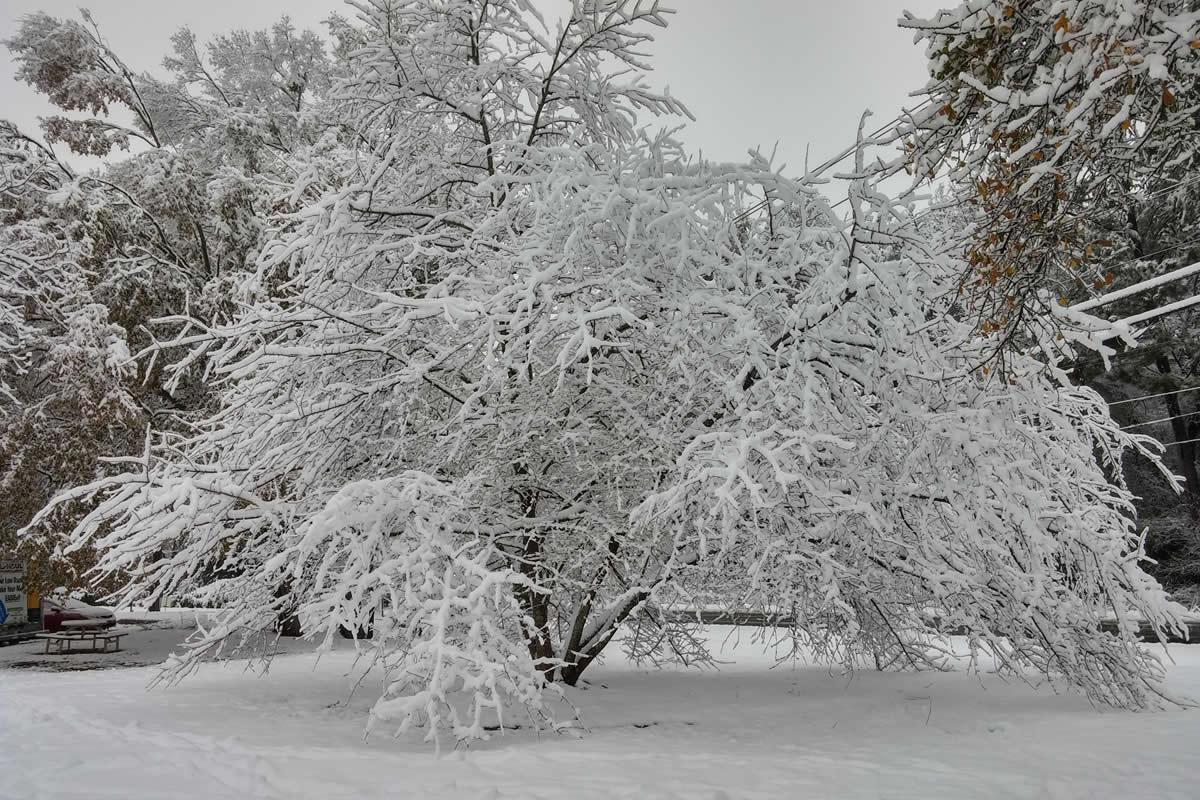 Atlanta snow tree